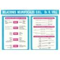 Lámina Relaciones Neurofocales (Dr. VOLL) (DINA3)